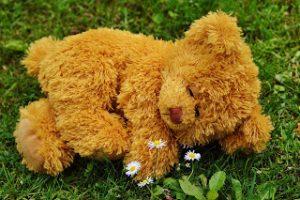 teddy-bear-792279_1920
